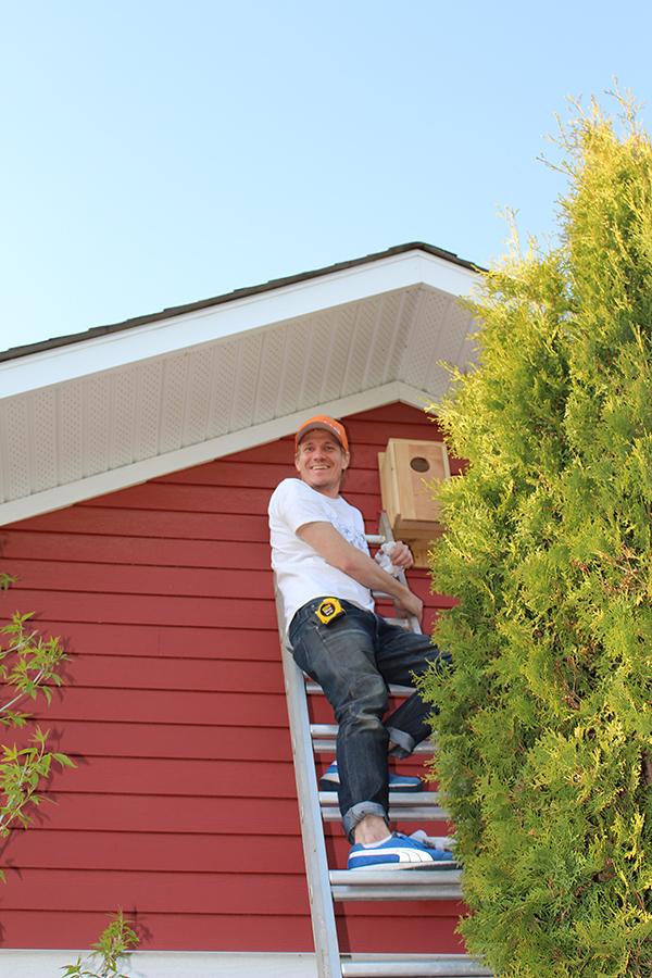 seth installing owl house