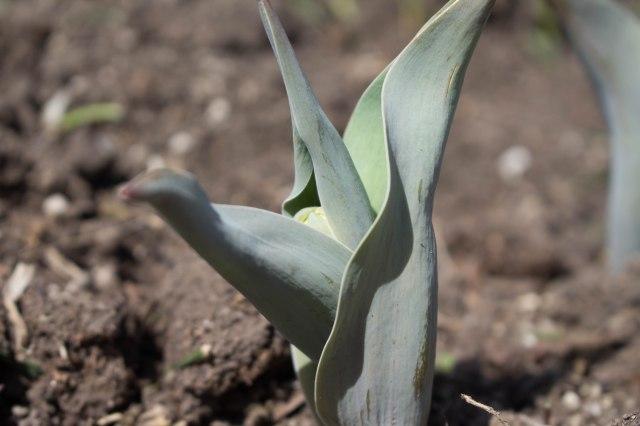 Daffodil (1 of 1).jpg